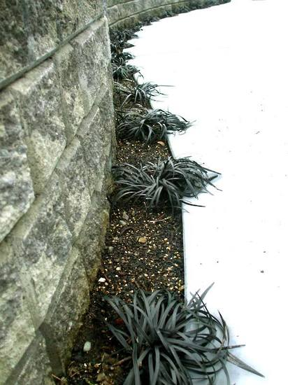 Black-Mondo-Grass-Border-and-Ezi-wall-with-concrete