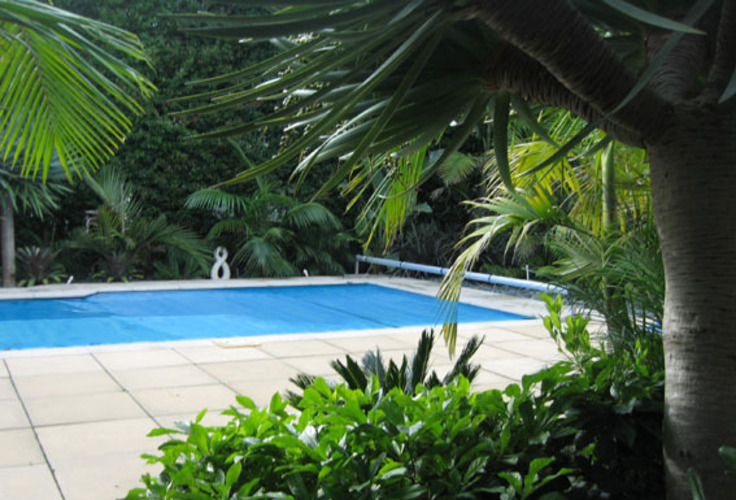 Subtropical-Landscaping-Around-Pool